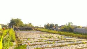 Lahan-hortikultura Stockfotografie