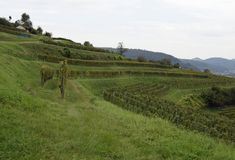 Lahr  vineyards. View past the Schutterlindenberg  vineyards towards the Black Forest, Ortenau region in Baden Germany Royalty Free Stock Photos