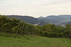 Lahr vineyards. View past the vineyards towards the City of Lahr, Ortenau region in Baden Germany stock photography