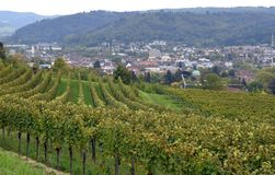 Lahr vineyards. View past the vineyards towards the City of Lahr, Ortenau region in Baden Germany royalty free stock image