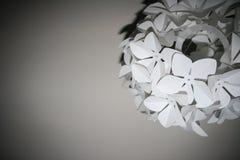 Laightshade floral blanc Image libre de droits