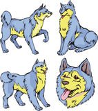 Laika-Hunde Stockfotos