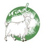 Laine de chèvre de montagne Images libres de droits