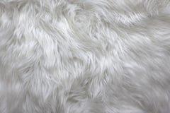 laines Photo stock