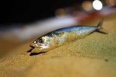 Laisse aller pêcher Photo stock