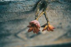 Laisse ce ressembler aux fleurs succulentes d'usines rouge et jaune Image stock