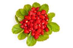 laisse des fraises Photographie stock libre de droits
