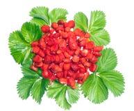 laisse des fraises Images stock