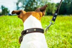 Laisse et propriétaire de chien photographie stock