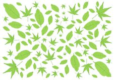 Laisse le modèle vert et beaucoup des feuilles frais illustration libre de droits