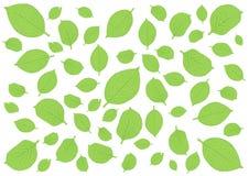 Laisse le mod?le vert sur le fond blanc illustration de vecteur