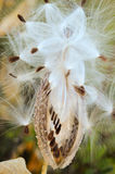 Laisser vont des graines Photographie stock libre de droits