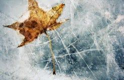 Laissez congelé dans l'eau Image libre de droits