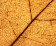 Laissez la texture Photo stock