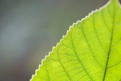 Laissez la texture photographie stock libre de droits
