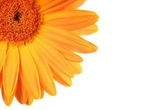 laissez le soleil Image libre de droits