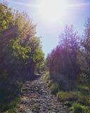 Laissez le soleil briller sur votre chemin Photos libres de droits