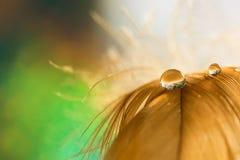 Laissez tomber la rosée de l'eau sur le plan rapproché pelucheux de plume avec le beau bokeh sur le fond vert Image tendre romant Photographie stock
