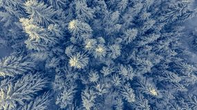 Laissez tomber vers le bas la vue de la forêt couverte par neige Photo libre de droits