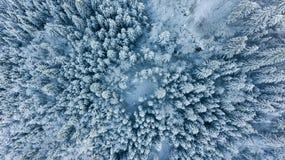 Laissez tomber vers le bas la vue de la forêt couverte par neige Photos stock