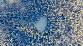 Laissez tomber vers le bas la vue de la forêt couverte par neige Image libre de droits
