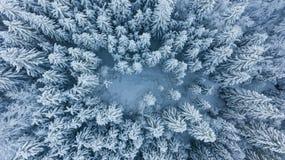 Laissez tomber vers le bas la vue de la forêt couverte par neige Image stock