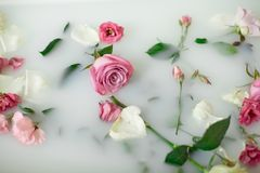 Lait dans le bain avec des roses image libre de droits