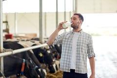 Lait de vaches potable à homme ou à agriculteur à l'exploitation laitière Photo libre de droits