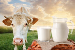 Lait en cruche et verre avec la vache Image stock