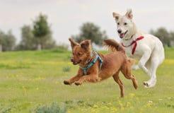 Laiteux le chien Photos libres de droits