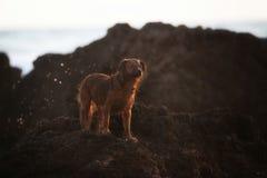 Laiteux mon chien photographie stock libre de droits