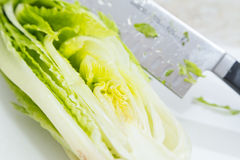 Laitue de coupe pour la salade à la maison Images stock