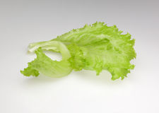 Laitue de feuille verte d'isolement sur le fond blanc Photographie stock