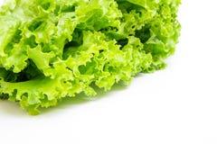 Laitue de feuilles verte (Lactuca L sativa ) Photo stock