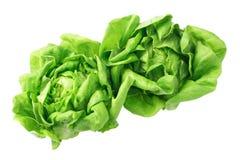 Laitue de salade Image libre de droits