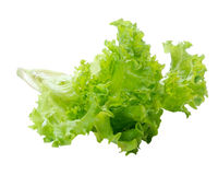 Laitue de salade verte avec un fond photo libre de droits
