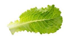 Laitue fraîche Feuille de salade Lames vertes fraîches de laitue photos libres de droits