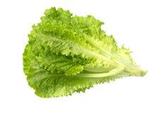 Laitue fraîche Feuille de salade Lames vertes fraîches de laitue Image libre de droits