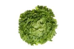Laitue (variété sativa de Lactuca le capitata), se ferment  image stock