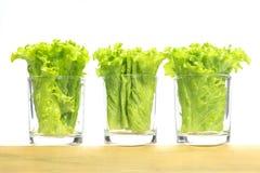 Laitue verte en petits verres plaçant sur le tube en bambou Photographie stock libre de droits