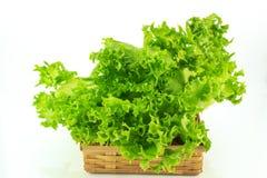 Laitue verte organique dans la cuvette d'isolement sur le fond blanc Photos stock