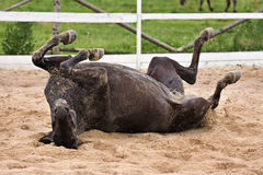 Laiyng del cavallo in sabbia fotografia stock