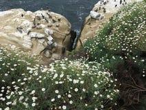 LaJolla foki plaży foki Fotografia Stock