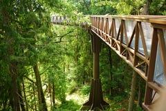 Laju塔卡、树机盖足迹复合体与走道,情报中心和观测塔,位于阿尼克什奇艾 库存图片