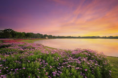The lak and flowers in public park Royalty Free Stock Image