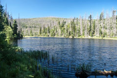 Laka sjö i Sumava berg arkivfoto