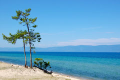 The Lake. And the tree Royalty Free Stock Photography