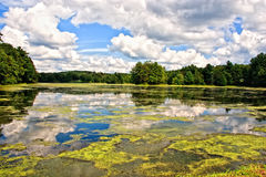 Lake. Cloudy sky reflected in the lake with algae stock image