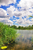 Lake. The dark blue sky over lake with a cane Royalty Free Stock Images