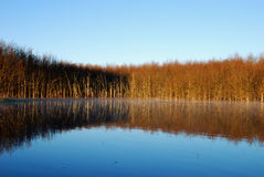 Lake. A lake with dead trees Royalty Free Stock Photo